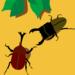 サラリーマンの副業。クワガタ、カブトムシは幼虫の時点で販売!